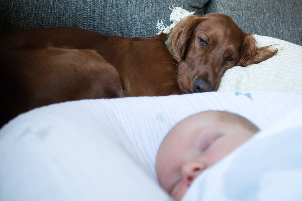 Dogs Protect Against Childhood Eczema and Even Asthma