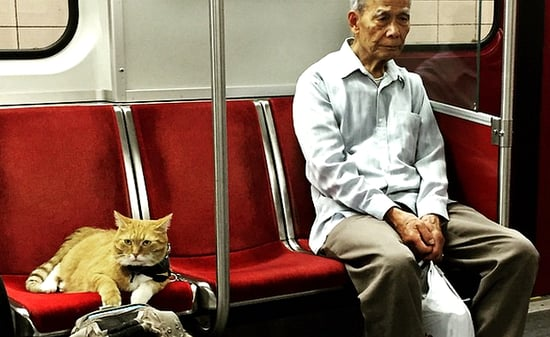 Check Out These Cats Riding Subways in Different Countries