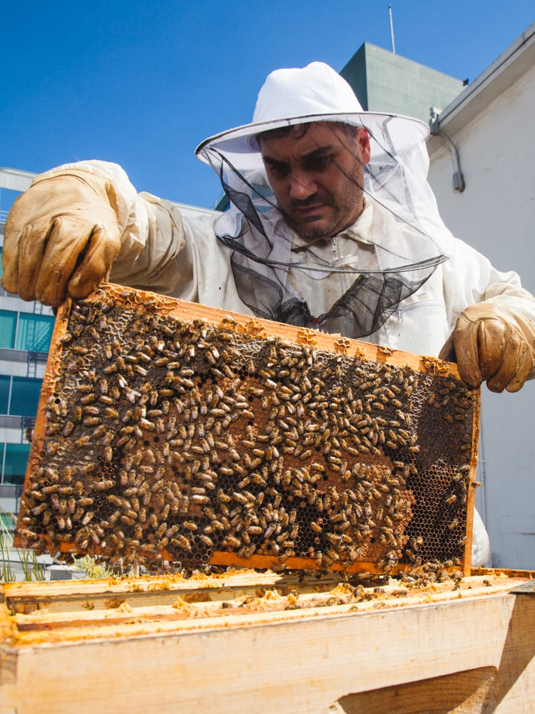 What Is Honey Laundering?