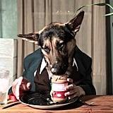 كلب الراعي الألماني أودين يلعق بلسانه بعض زبدة الفول السودانيّ...