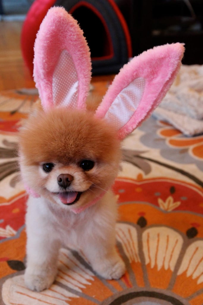 It's a Boo bunny!
