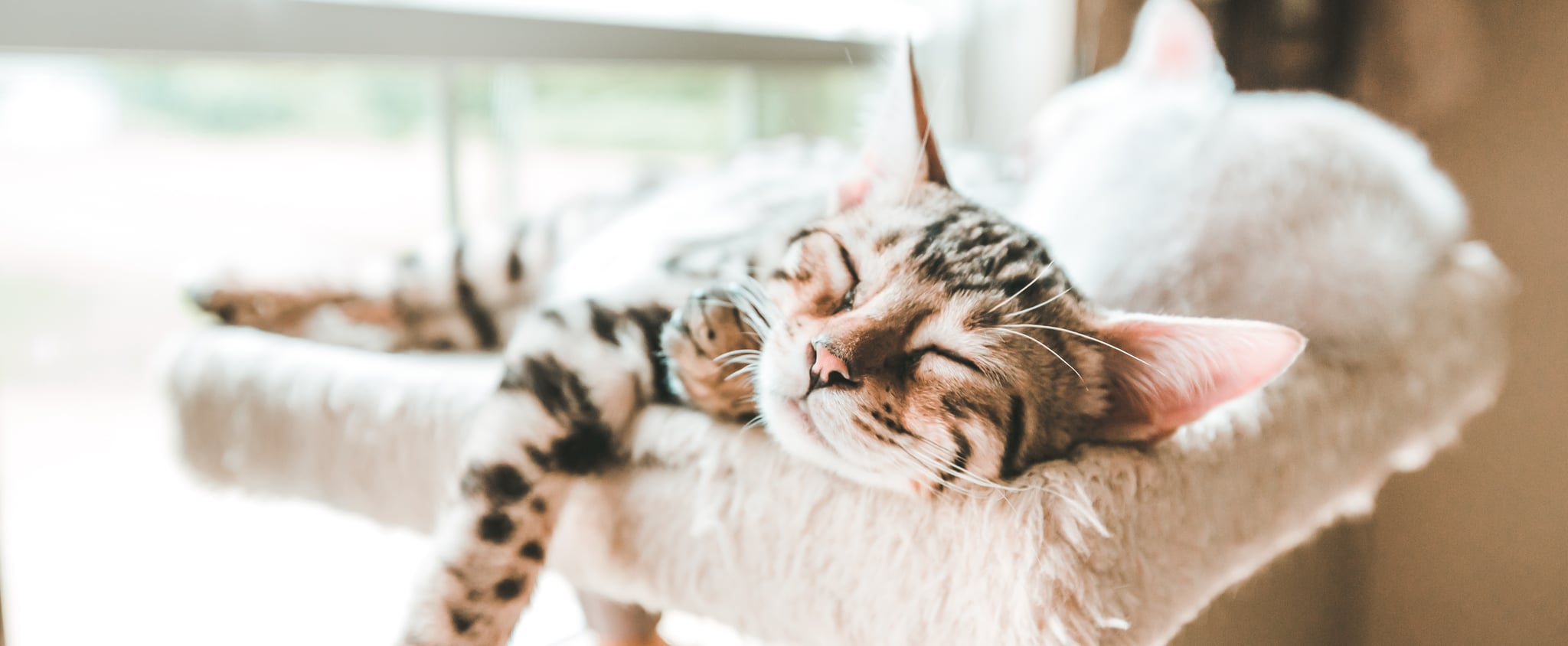 Why Does My Cat Purr in Their Sleep?
