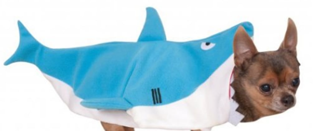 The Top 10 Pet Costumes on Amazon This Year