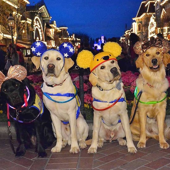 Photos of Service Dogs at Disneyland 2018