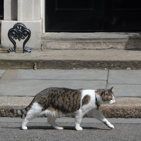 Larry the Cat at 10 Downing Street