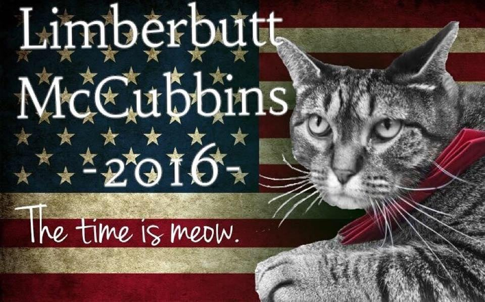Limberbutt Mccubbins The Cat Running For President