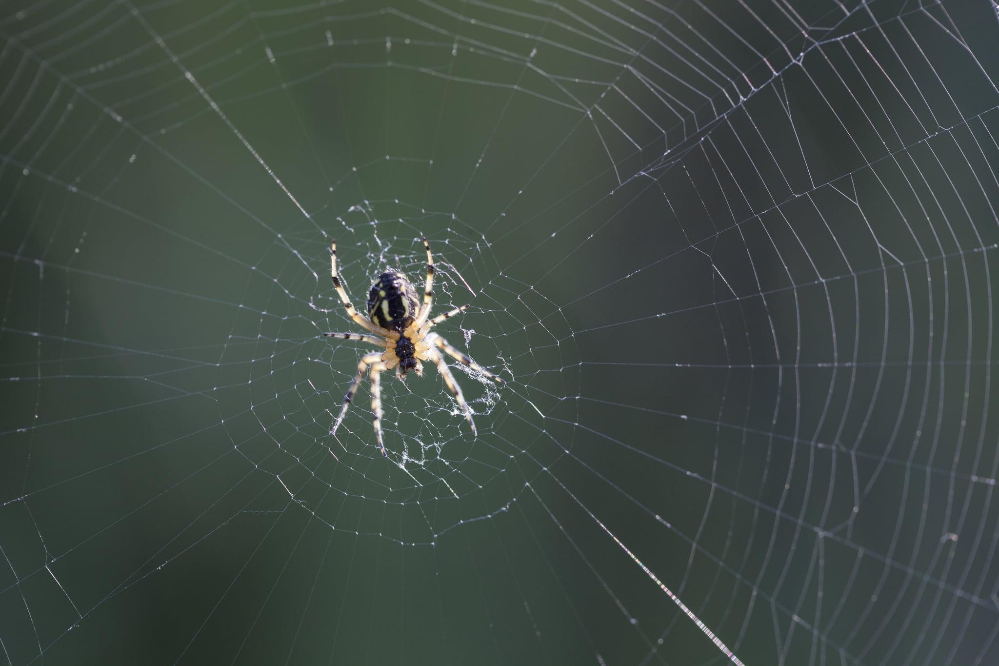 What Do Dreams About Bugs Mean Popsugar Australia Smart Living