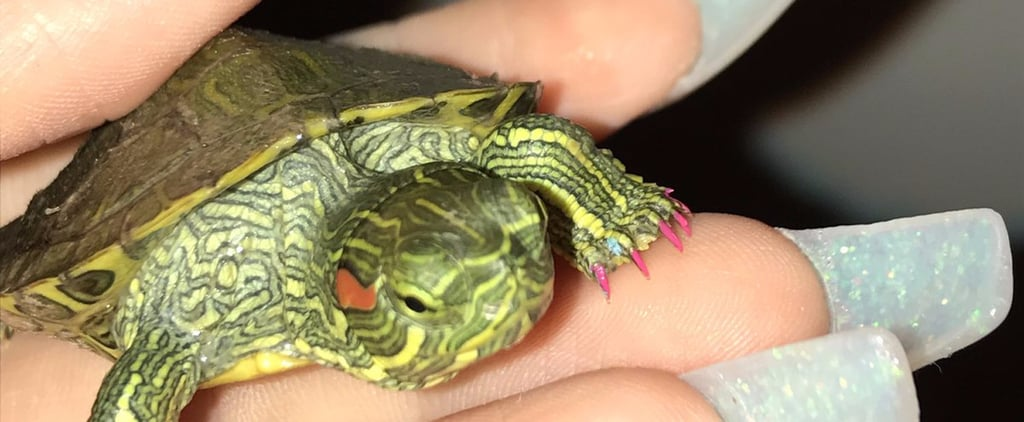 This Girl Gives Her Turtle, Juanita, the Freshest Manicures Ever