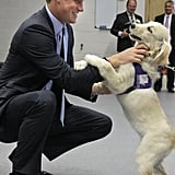 Harry visited the Canine Partners Training Center in July 2010.