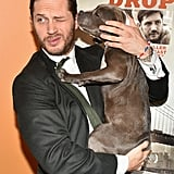 Tom Hardy's Date For the Premiere of The Drop Was a Puppy