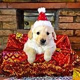 Pure Christmas Joy