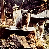 Dead Cat From Pet Sematary