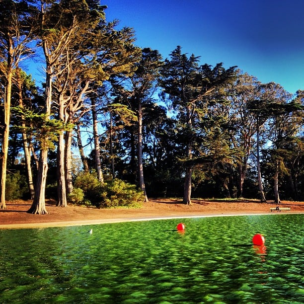 Spend the Day in Golden Gate Park