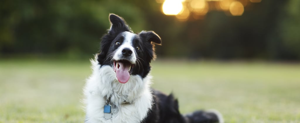 Can Dogs Get Mosquito Bites?