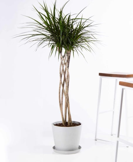 Best Large Indoor Plants