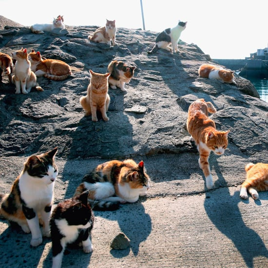 What Is Cat Island?