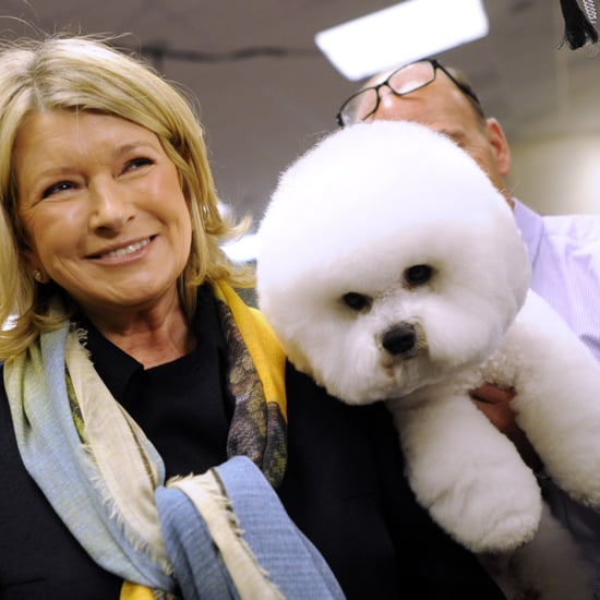 Martha Stewart Making CBD Pet Products