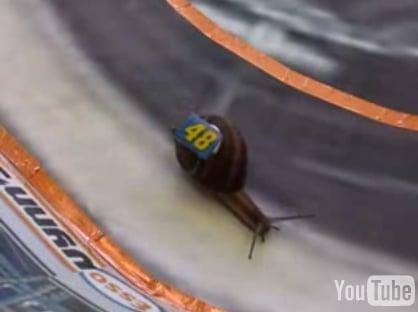 Snail Nascar