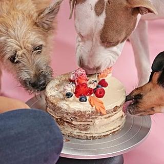 كعكة متعدّة الطبقات قابلة للأكل من قبل الكلاب