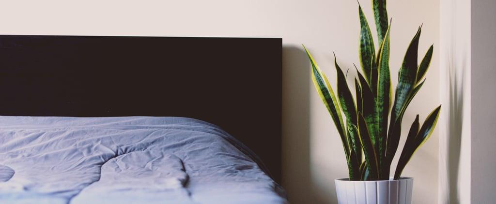 Plants That Help You Sleep on Amazon
