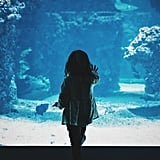 A Trip to a Local Aquarium