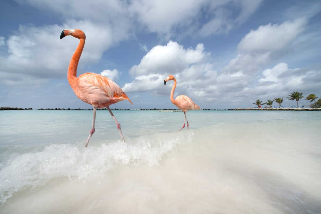 These flamingos who enjoy long walks on the beach.