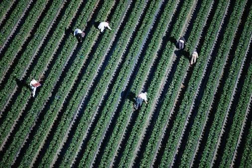Immigrants the New Slave Labor? FBI Probes Treatment