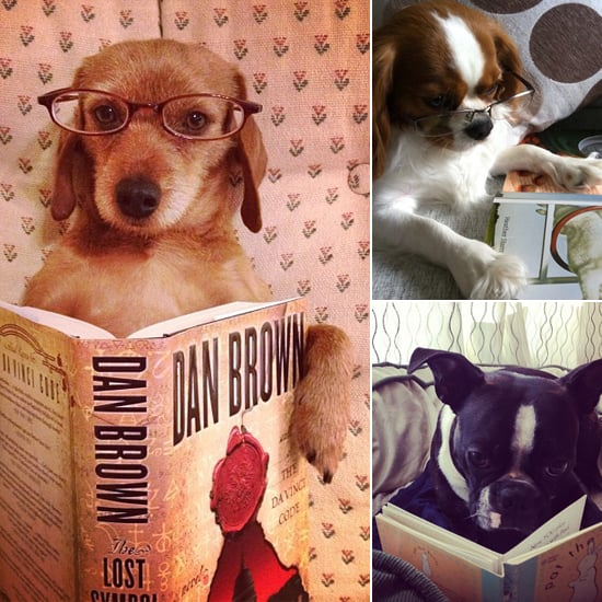Get Schooled by 10 Reading Dogs