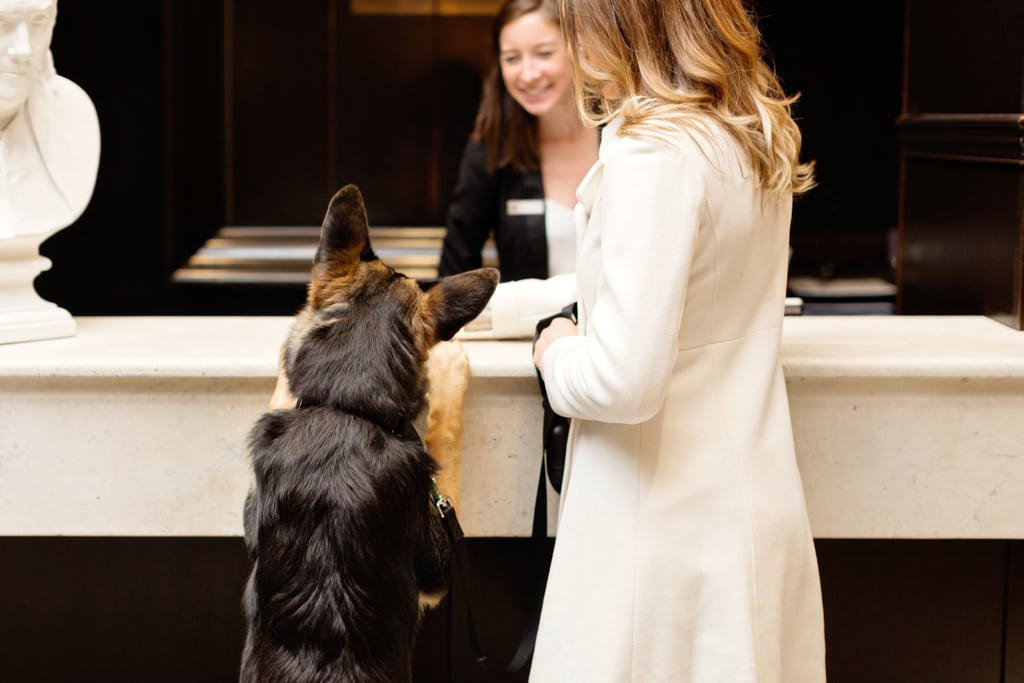 The Most Dog-Friendly Hotels in the U.S.
