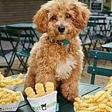 Bark + Shake Shack Frenchie Fries Dog Toy
