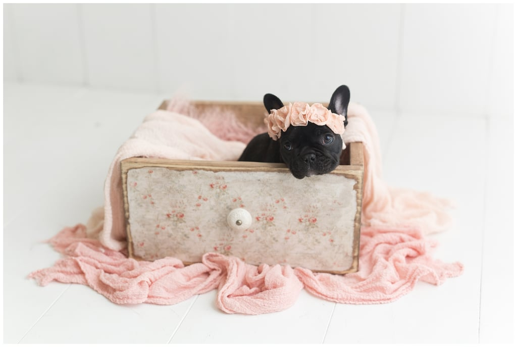 Newborn Photo Shoot With French Bulldog | POPSUGAR Family ...