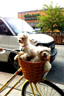 Pet Pic of the Day: Bike Ride