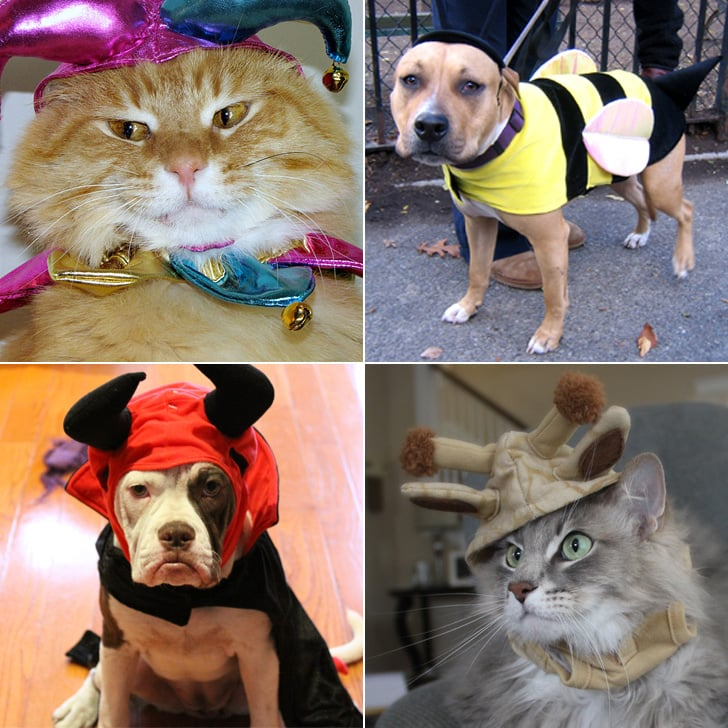 Cute Animals in Halloween Costumes & Cute Animals in Halloween Costumes | POPSUGAR Pets