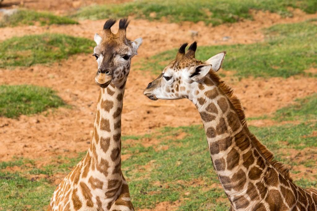 Monarto Zoo, near Murray Bridge