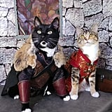 Cats Cosplaying as Jon Snow and Tyrion Lannister