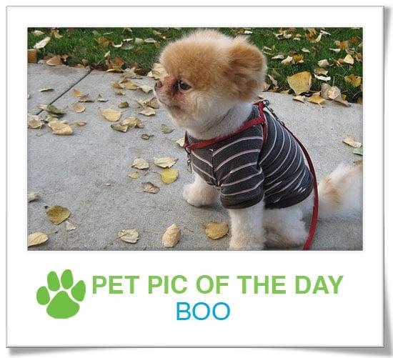 Pet Pics on PetSugar 2009-01-27 09:30:21