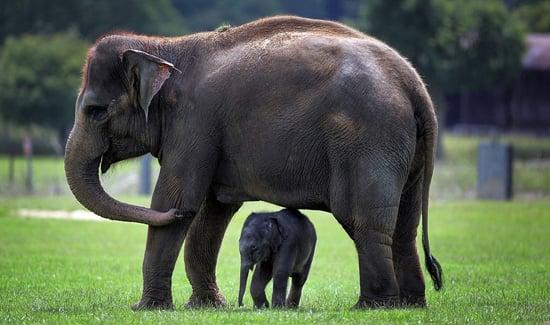 Pregnancy Lengths in Mammals