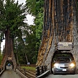 Drive-Thru Tree Park (California)