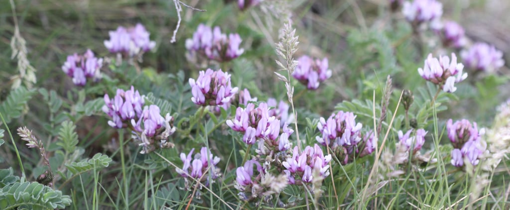 What Is Astragalus?