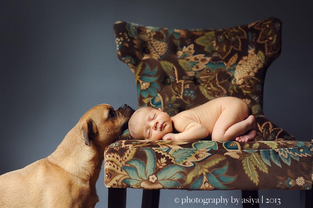 Adorable Newborn and Pet Photos