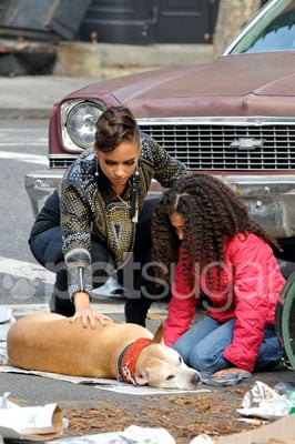 In the Spotlight: Alicia Keys Has a Furry Run-In On Set!