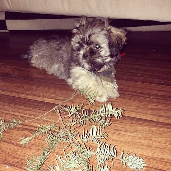 Pets Ruining Christmas Decorations