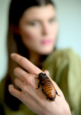 Summer Rayne Oakes Raises Exotic Insects in Her Bedroom