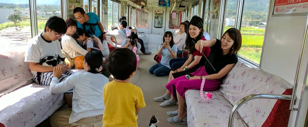 Because a Plain Old Cat Cafe Isn't Enough, Japan Decided to Have 1 on a Train