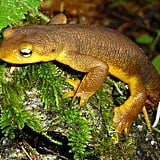 A cute newt, who knew?