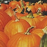 You get to visit the pumpkin patch.