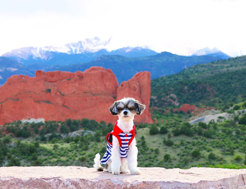 Tinkerbelle the Dog Colorado Trip