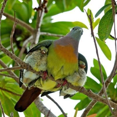 Say Aww: Cutest Bird Parenting Photo