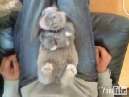 Cute Alert: Sleeping Bunny
