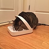 Sureflap Microchip Pet Feeder